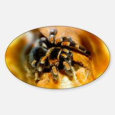 Mexican red-leg tarantula Sticker (Oval)