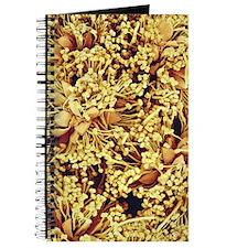 Mimosa flowers, SEM Journal