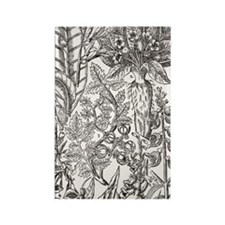 Mandrake and foxglove plants Rectangle Magnet