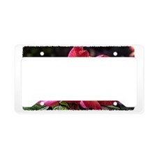 deep red rose License Plate Holder