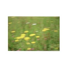 Meadow flowers Rectangle Magnet
