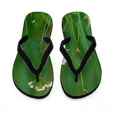 Marsh valerian (Valeriana dioica) Flip Flops