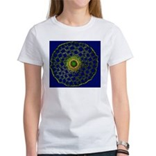 Mare's tail stem, light micrograph Tee