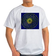 Mare's tail stem, light micrograph T-Shirt