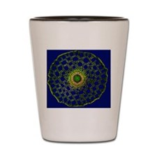 Mare's tail stem, light micrograph Shot Glass
