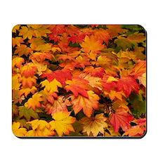 Maple (Acer japonicum vitifolia) leaves Mousepad