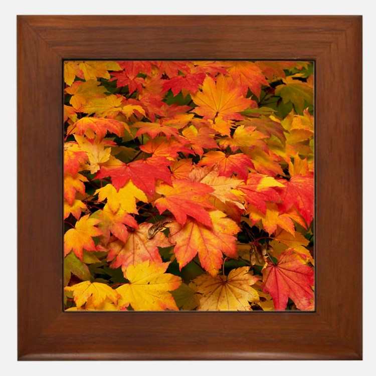 Maple (Acer japonicum vitifolia) leave Framed Tile