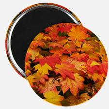 Maple (Acer japonicum vitifolia) leaves Magnet
