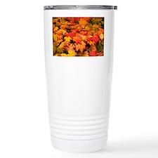 Maple (Acer japonicum vitifolia Travel Mug