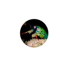 Mantis shrimp Mini Button