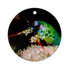Mantis shrimp Round Ornament