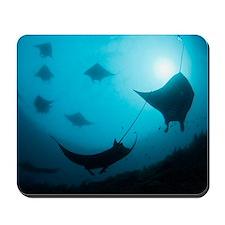 Manta rays Mousepad