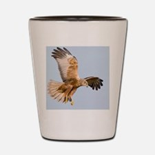 Marsh harrier hunting Shot Glass
