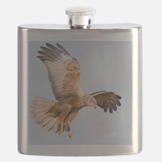 Marsh harrier hunting Flask