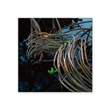 "Mangrove roots Square Sticker 3"" x 3"""