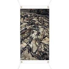 Marine iguanas basking Banner