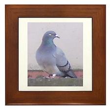 Random Pigeon Framed Tile