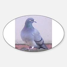 Random Pigeon Oval Decal