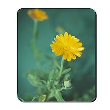 Marigold flowers Mousepad