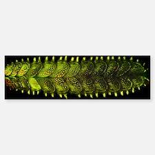 Marine worm fluorescing Bumper Bumper Sticker