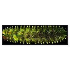 Marine worm fluorescing Bumper Sticker