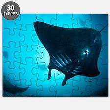 Manta rays Puzzle