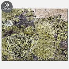 Map lichen (Rhizocarpon geographicum) Puzzle