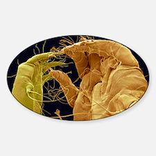 Mange mites, SEM Sticker (Oval)