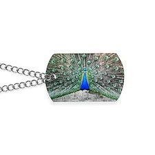 Male peacock displaying Dog Tags