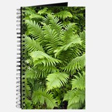 Male fern (Dryopteris filix-mas) Journal