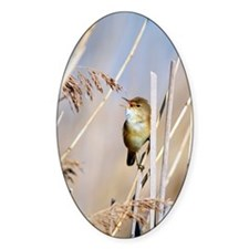 Male Eurasian reed warbler singing Decal