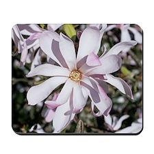 Magnolia flower Mousepad