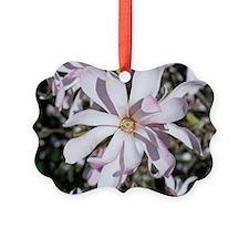 Magnolia flower Ornament