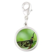Male mayfly Silver Round Charm