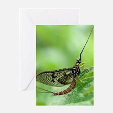 Male mayfly Greeting Card