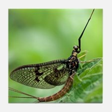 Male mayfly Tile Coaster