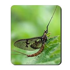 Male mayfly Mousepad