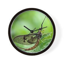 Male mayfly Wall Clock