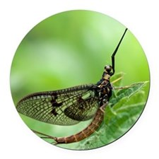 Male mayfly Round Car Magnet