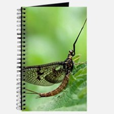 Male mayfly Journal