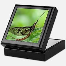 Male mayfly Keepsake Box