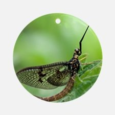 Male mayfly Round Ornament
