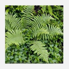 Male fern (Dryopteris filix-mas) Tile Coaster