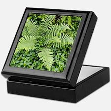 Male fern (Dryopteris filix-mas) Keepsake Box