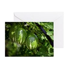 Malabar gourd fruit Greeting Card