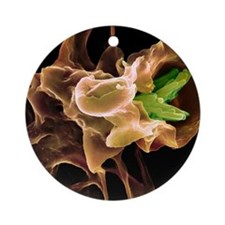 Macrophage engulfing TB bacteria, S Round Ornament
