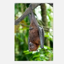 Malayan Flying Fox Postcards (Package of 8)