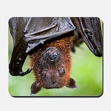 Malayan Flying Fox Mousepad