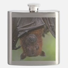 Malayan Flying Fox Flask