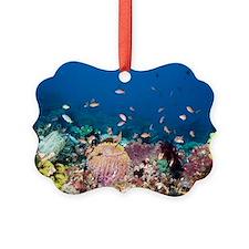 Lyretail anthias fish Ornament